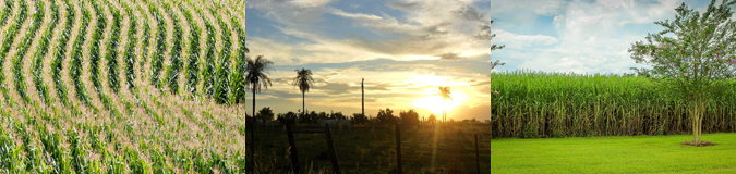 AcuComm's Daily Full Access Project – Paraguay Ethanol Plant