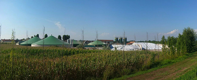 The Rise of Biogas in the US